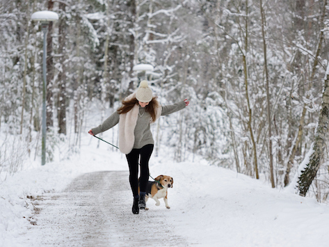 Pet-Safe Ice Melts: Are They Really Safe?